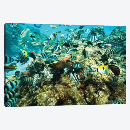 Coral Reef Fish Swimming In The Pacific Ocean, Tahiti, French Polynesia Canvas Print #PIM14598} by Panoramic Images Canvas Art Print
