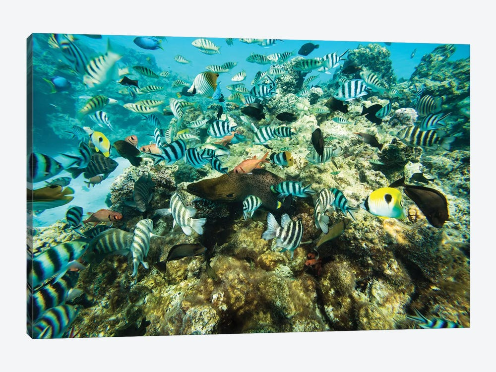 Coral Reef Fish Swimming In The Pacific Ocean, Tahiti, French Polynesia by Panoramic Images 1-piece Art Print