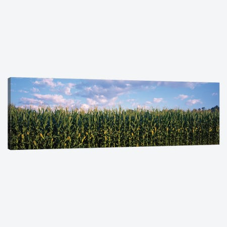 Corn Field, Baltimore County, Maryland, USA Canvas Print #PIM14599} by Panoramic Images Art Print