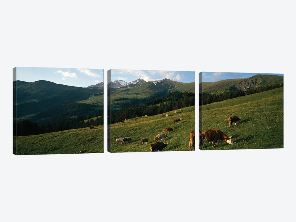 Cows Grazing In A Meadow, Swiss Alps, Switzerland by Panoramic Images 3-piece Canvas Art