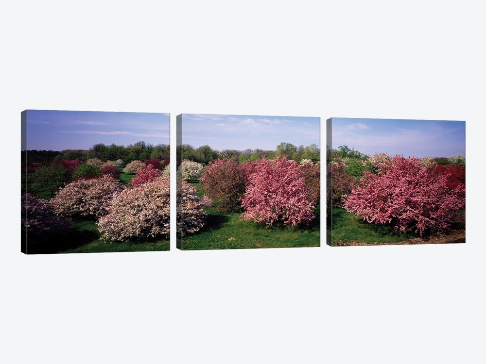 Crab Apple Trees In An Orchard, Morton Arboretum, Lisle, Illinois, USA by Panoramic Images 3-piece Canvas Art Print