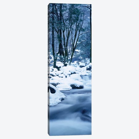 Creek Flowing Through Forest In Winter, Yosemite National Park, California, USA Canvas Print #PIM14602} by Panoramic Images Art Print