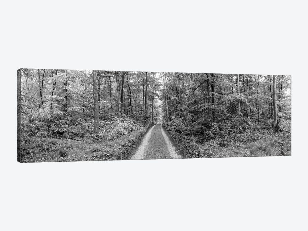 Dirt Road Passing Through A Forest, Baden-Württemberg, Germany by Panoramic Images 1-piece Art Print