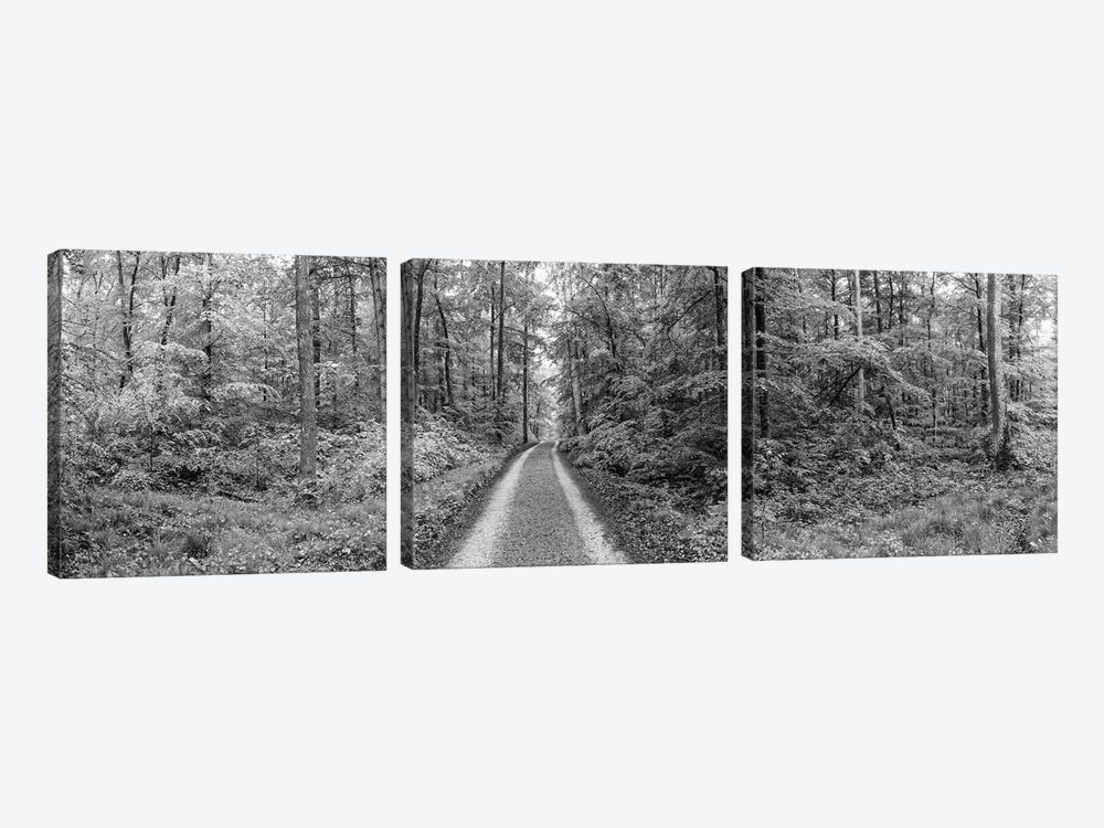 Dirt Road Passing Through A Forest, Baden-Württemberg, Germany by Panoramic Images 3-piece Canvas Print