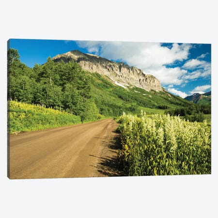 Dirt Road Passing Through A Forest, Crested Butte, Colorado, USA Canvas Print #PIM14622} by Panoramic Images Canvas Print