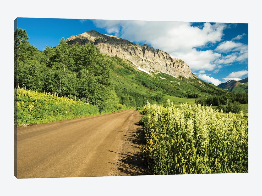 Dirt Road Passing Through A Forest, Crested Butte, Colorado, USA by Panoramic Images 1-piece Canvas Art