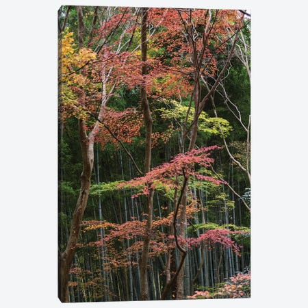 Fall Foliage At Ginkaku-Ji Temple, Kyoti Prefecture, Japan Canvas Print #PIM14638} by Panoramic Images Canvas Artwork