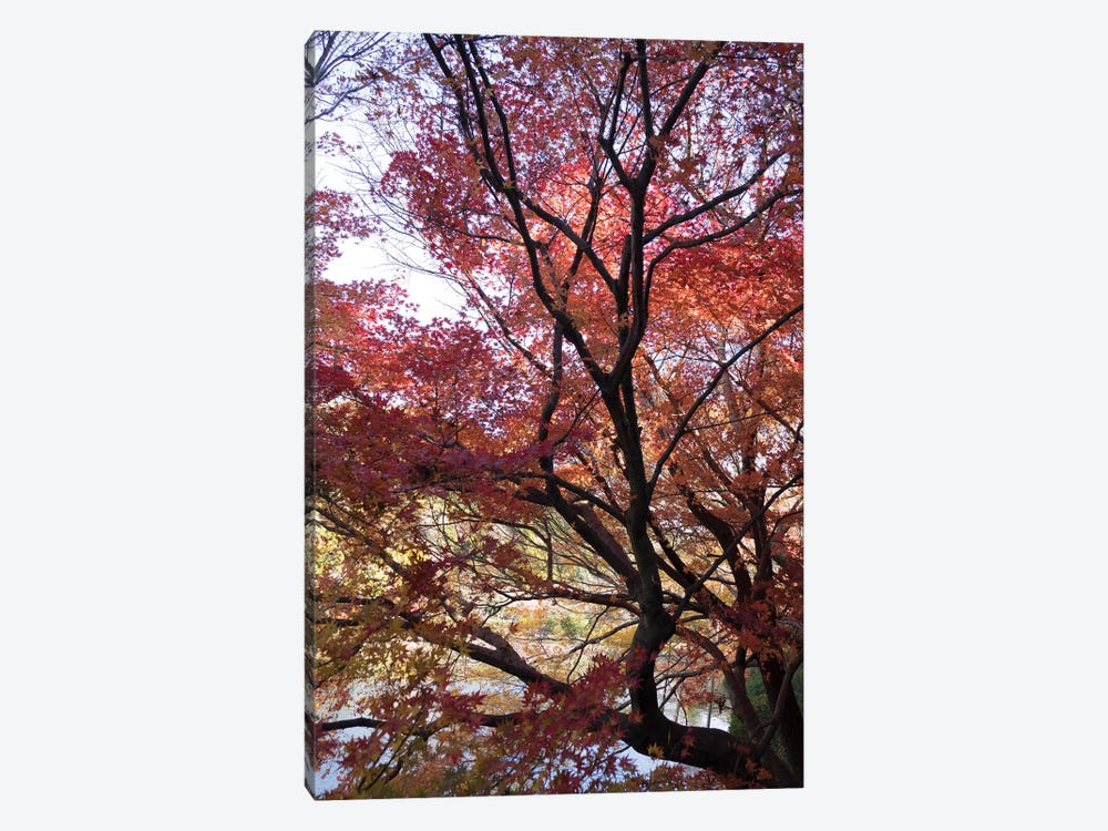 Fall Foliage At Ryoan-Ji Temple, Kyoti Prefecture, Japan by Panoramic Images 1-piece Canvas Wall Art