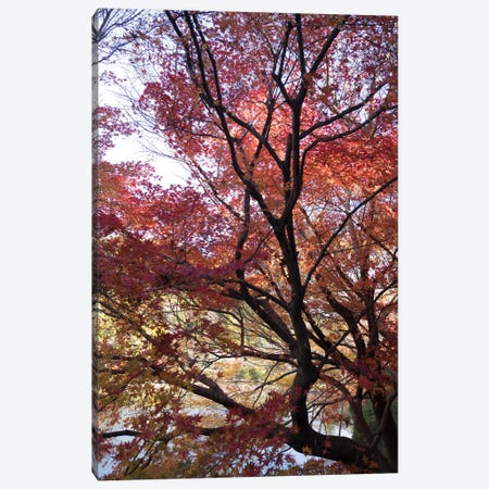 Fall Foliage At Ryoan-Ji Temple, Kyoti Prefecture, Japan Canvas Print #PIM14640} by Panoramic Images Canvas Art Print