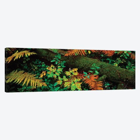 Fall Foliage In A Forest, Adirondack Mountains, Franklin County, New York State, USA I Canvas Print #PIM14641} by Panoramic Images Canvas Print