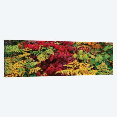 Fall Foliage In A Forest, Adirondack Mountains, Franklin County, New York State, USA II 3-Piece Canvas #PIM14642} by Panoramic Images Canvas Art Print