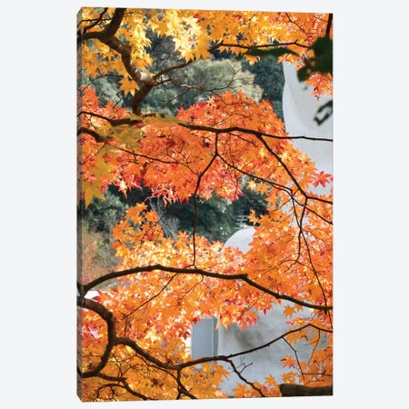 Fall Leaves On Maple Tree At Kodaiji Temple, Kyoti Prefecture, Japan 3-Piece Canvas #PIM14643} by Panoramic Images Canvas Art Print