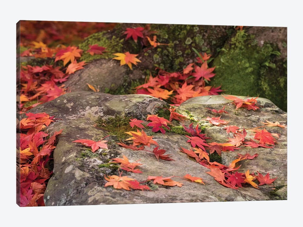 Fallen Autumnal Leaves On Rock, Kodaiji Temple, Kyoti Prefecture, Japan by Panoramic Images 1-piece Canvas Artwork