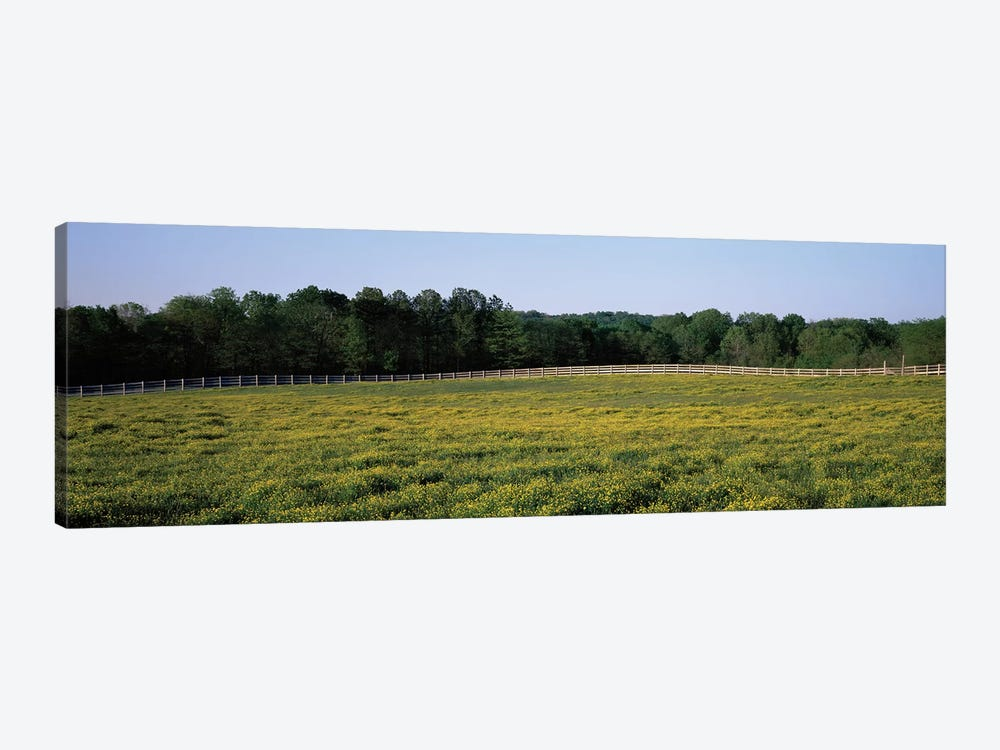 Fence Along A Field, Johnson County, Illinois, USA by Panoramic Images 1-piece Art Print