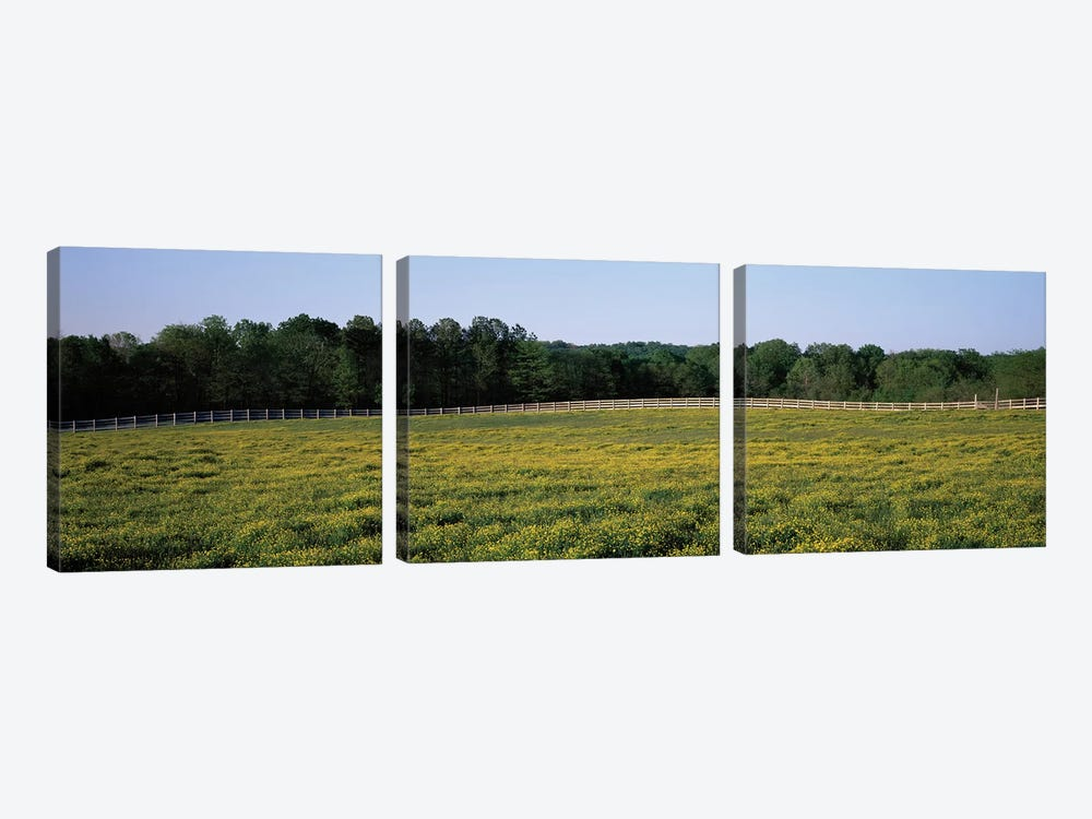 Fence Along A Field, Johnson County, Illinois, USA 3-piece Art Print