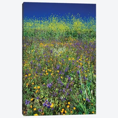 Field Of California Poppies And Canterbury Bells Wildflowers, Diamond Valley Lake, California, USA I Canvas Print #PIM14651} by Panoramic Images Canvas Wall Art