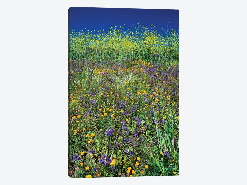 Field Of California Poppies And Canterbury Bells Wildflowers, Diamond Valley Lake, California, USA I by Panoramic Images 1-piece Canvas Art