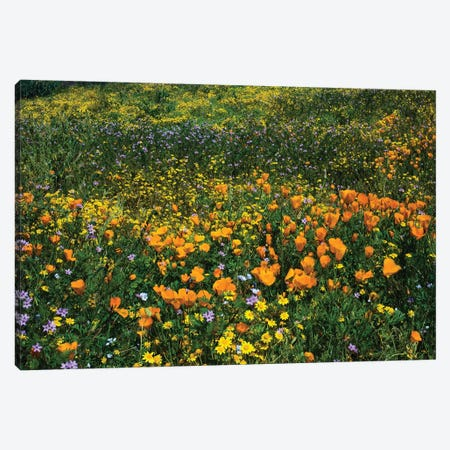 Field Of California Poppies And Canterbury Bells Wildflowers, Diamond Valley Lake, California, USA III Canvas Print #PIM14653} by Panoramic Images Canvas Wall Art