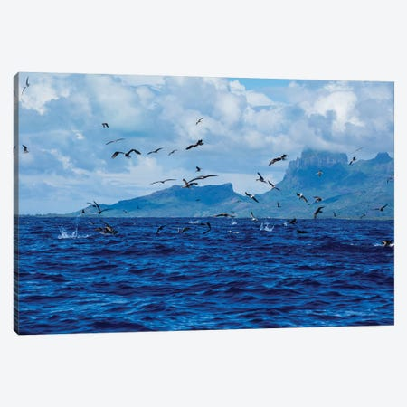 Flock Of Seagulls Flying Over The Pacific Ocean, Bora Bora, Society Islands, French Polynesia Canvas Print #PIM14660} by Panoramic Images Canvas Print