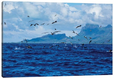 Flock Of Seagulls Flying Over The Pacific Ocean, Bora Bora, Society Islands, French Polynesia Canvas Art Print