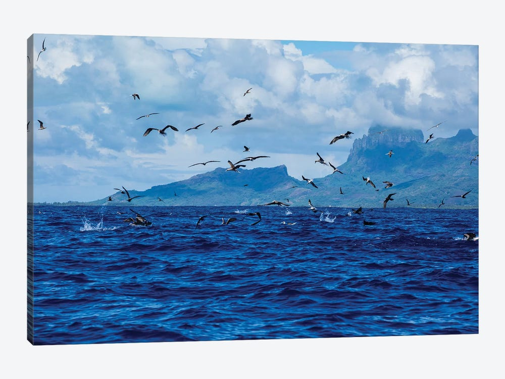 Flock Of Seagulls Flying Over The Pacific Ocean, Bora Bora, Society Islands, French Polynesia by Panoramic Images 1-piece Canvas Artwork