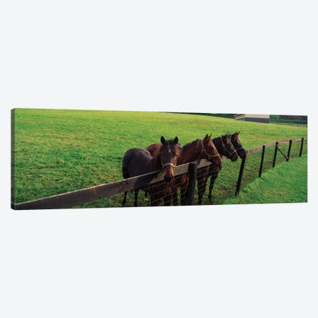 Four Horses Standing By Fence, Baltimore County, Maryland, USA Canvas Print #PIM14664} by Panoramic Images Canvas Art