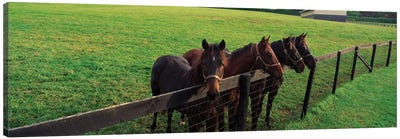 Four Horses Standing By Fence, Baltimore County, Maryland, USA Canvas Art Print