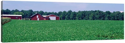 Green Field With Barn In The Background, Maryland, USA Canvas Art Print