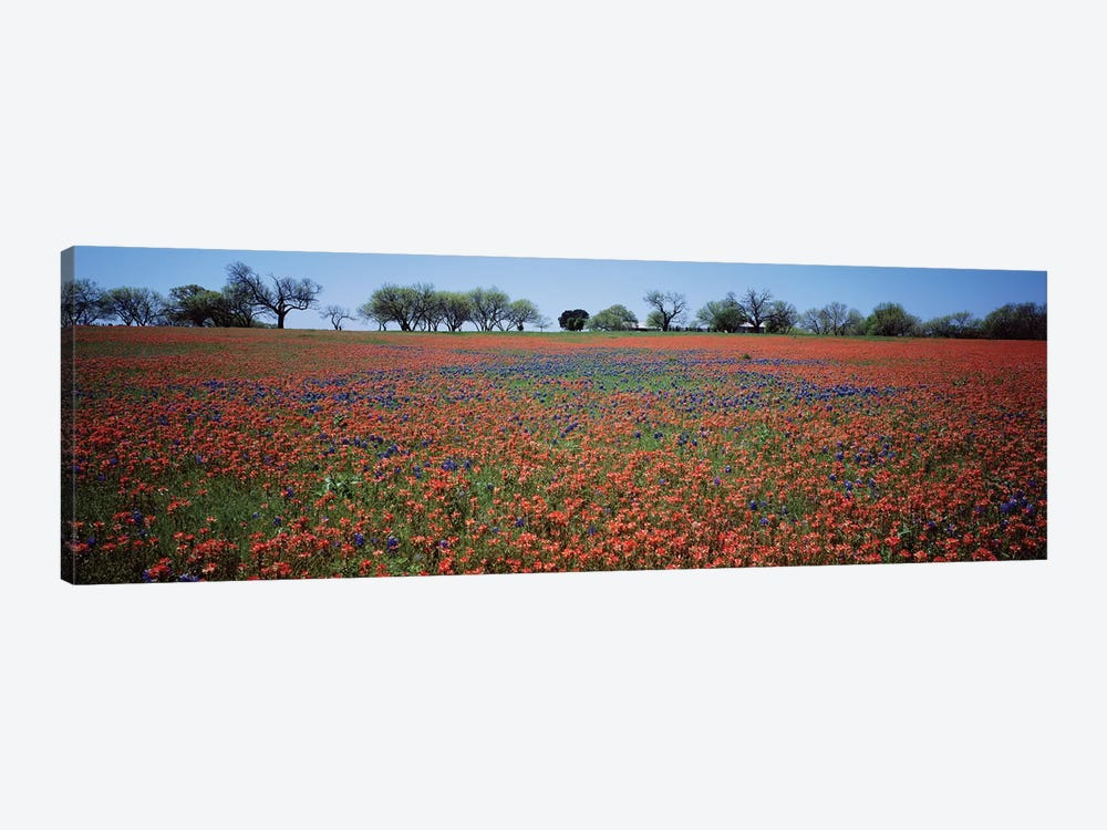Indian Paintbrush & Bluebonnets, Texas by Panoramic Images 1-piece Canvas Art