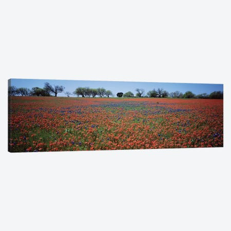 Indian Paintbrush & Bluebonnets, Texas 3-Piece Canvas #PIM14703} by Panoramic Images Canvas Wall Art