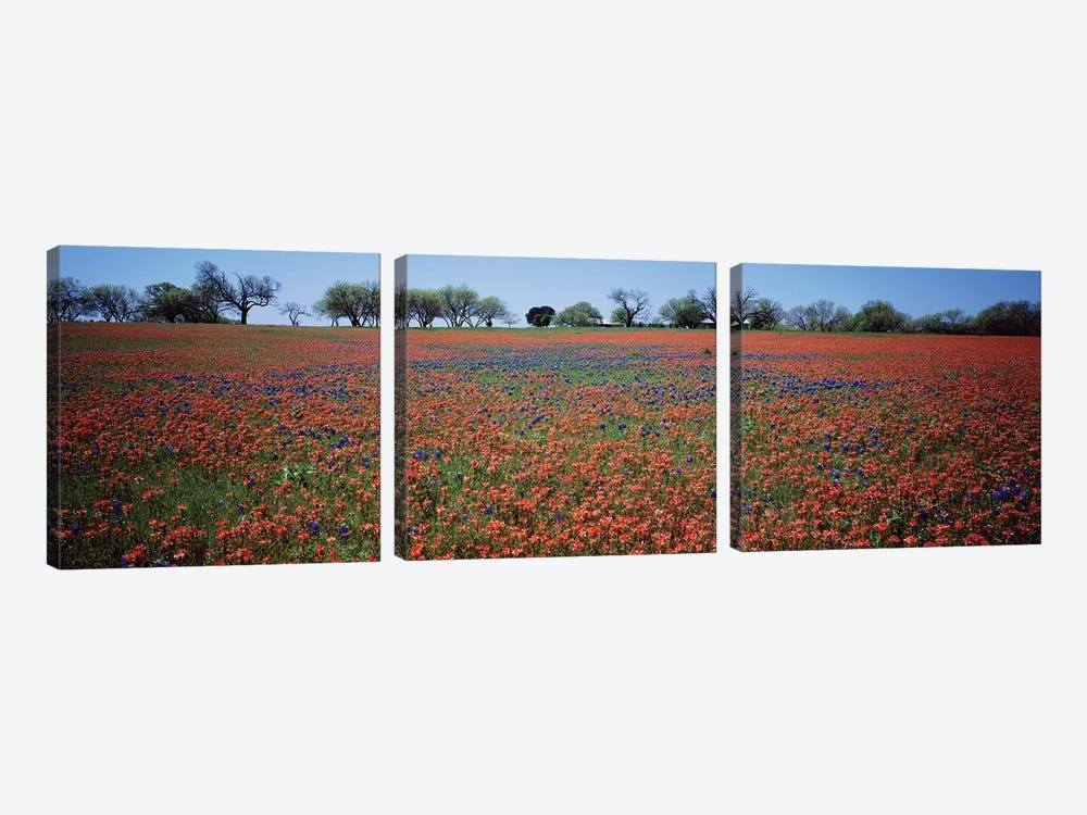 Indian Paintbrush & Bluebonnets, Texas by Panoramic Images 3-piece Canvas Art