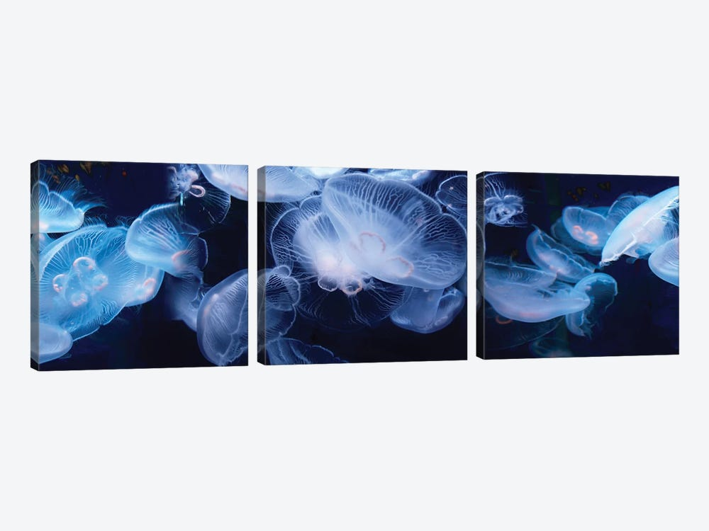 Jellyfish Swimming Underwater by Panoramic Images 3-piece Canvas Art