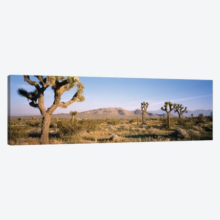 Joshua Tree National Park, California, USA I Canvas Print #PIM14711} by Panoramic Images Canvas Print