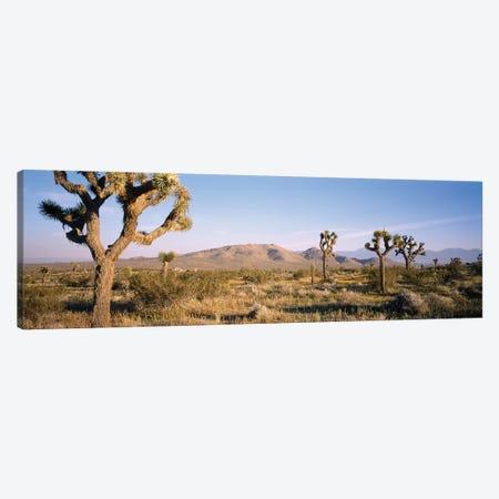 Joshua Tree National Park, California, USA I Canvas Print #PIM14711} by Panoramic Images Canvas Print