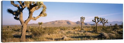 Joshua Tree National Park, California, USA I Canvas Art Print