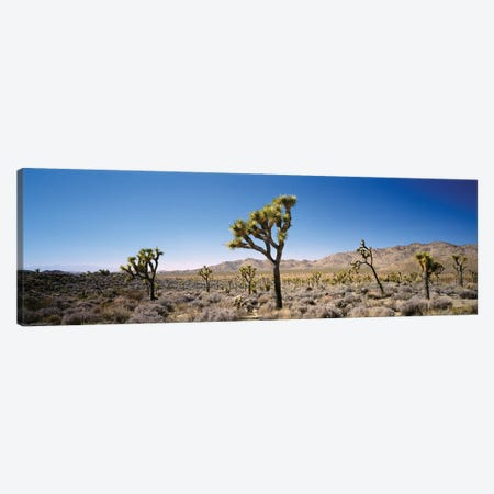 Joshua Tree National Park, California, USA II Canvas Print #PIM14712} by Panoramic Images Canvas Print