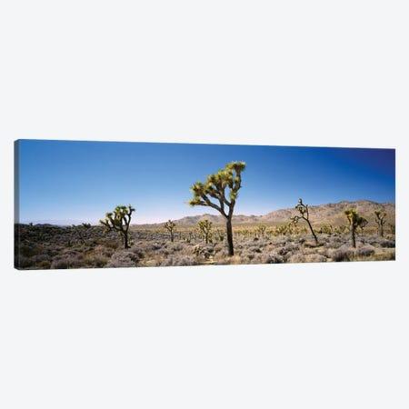 Joshua Tree National Park, California, USA II Canvas Print #PIM14712} by Panoramic Images Canvas Print