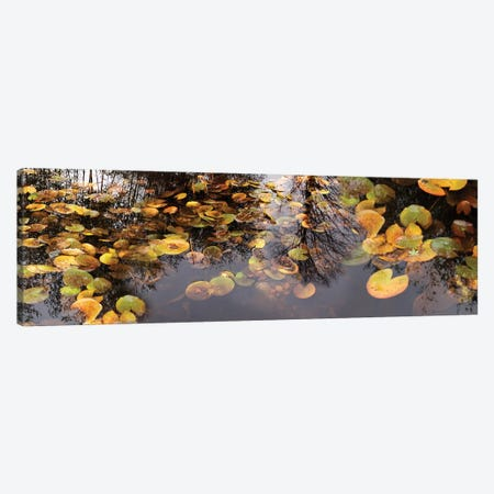 Lily Pad Floating In A Pond Canvas Print #PIM14718} by Panoramic Images Art Print
