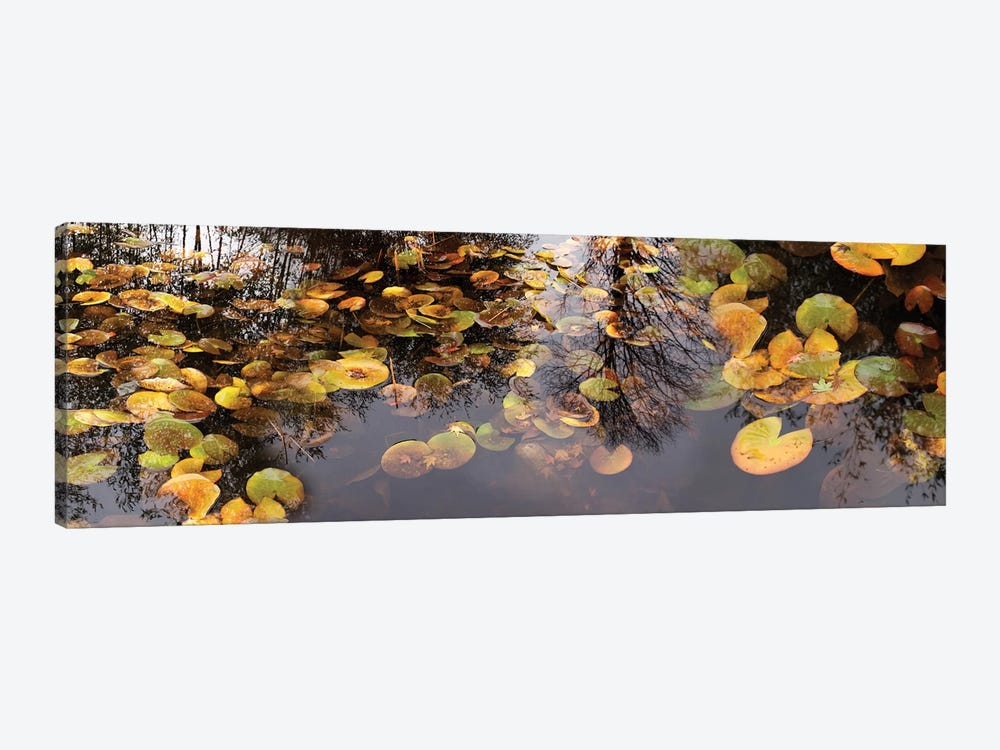 Lily Pad Floating In A Pond by Panoramic Images 1-piece Canvas Wall Art