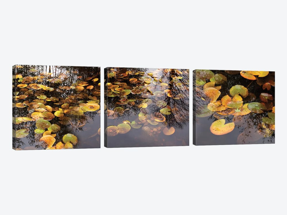 Lily Pad Floating In A Pond by Panoramic Images 3-piece Canvas Wall Art