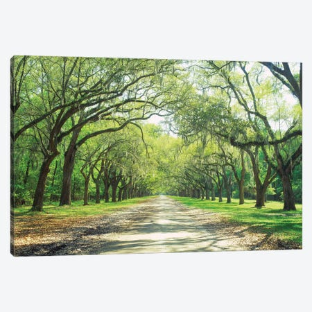 Live Oaks And Spanish Moss Wormsloe State Historic Site Savannah, Georgia Canvas Print #PIM14719} by Panoramic Images Art Print