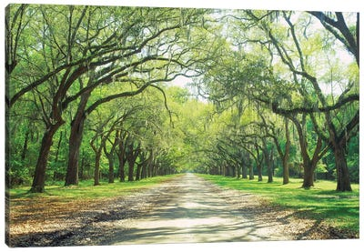 Live Oaks And Spanish Moss Wormsloe State Historic Site Savannah, Georgia Canvas Art Print