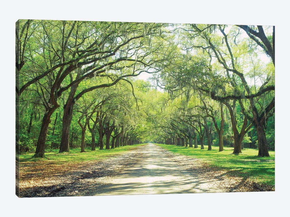 Live Oaks And Spanish Moss Wormsloe State Historic Site Savannah, Georgia by Panoramic Images 1-piece Canvas Art Print