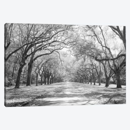 Live Oaks And Spanish Moss Wormsloe State Historic Site Savannah, Georgia (Black And White) I Canvas Print #PIM14720} by Panoramic Images Canvas Art