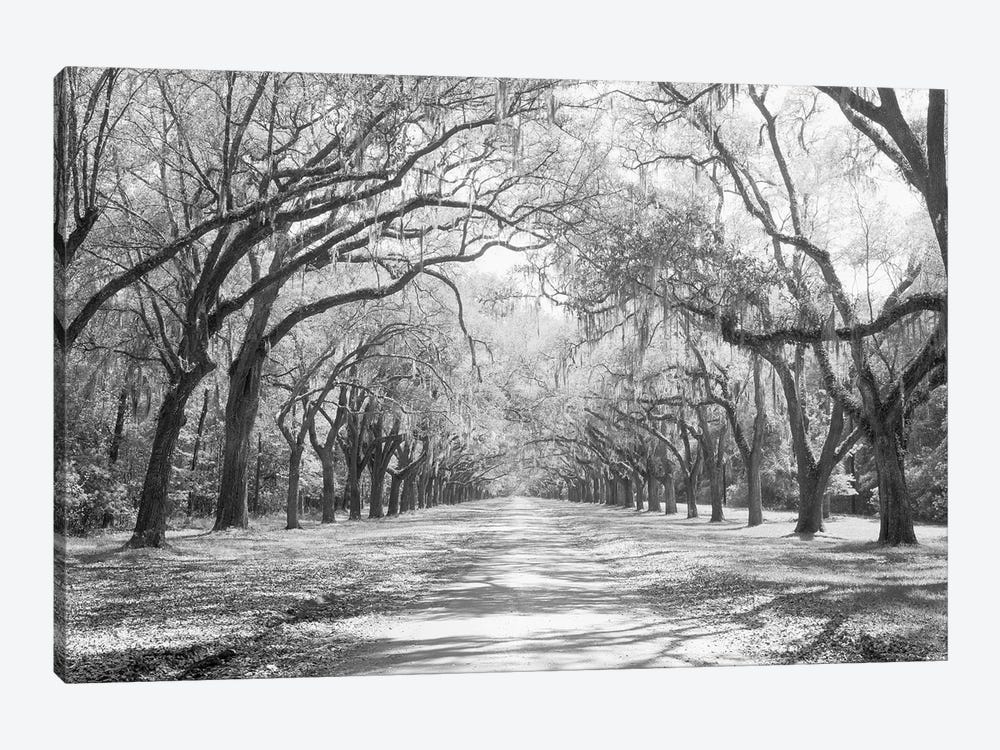 Live Oaks And Spanish Moss Wormsloe State Historic Site Savannah, Georgia (Black And White) I by Panoramic Images 1-piece Art Print