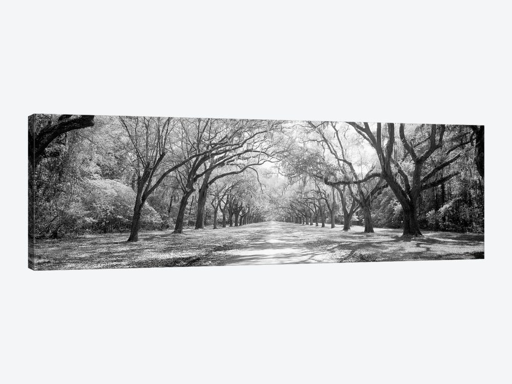 Live Oaks And Spanish Moss Wormsloe State Historic Site Savannah, Georgia (Black And White) II by Panoramic Images 1-piece Canvas Wall Art