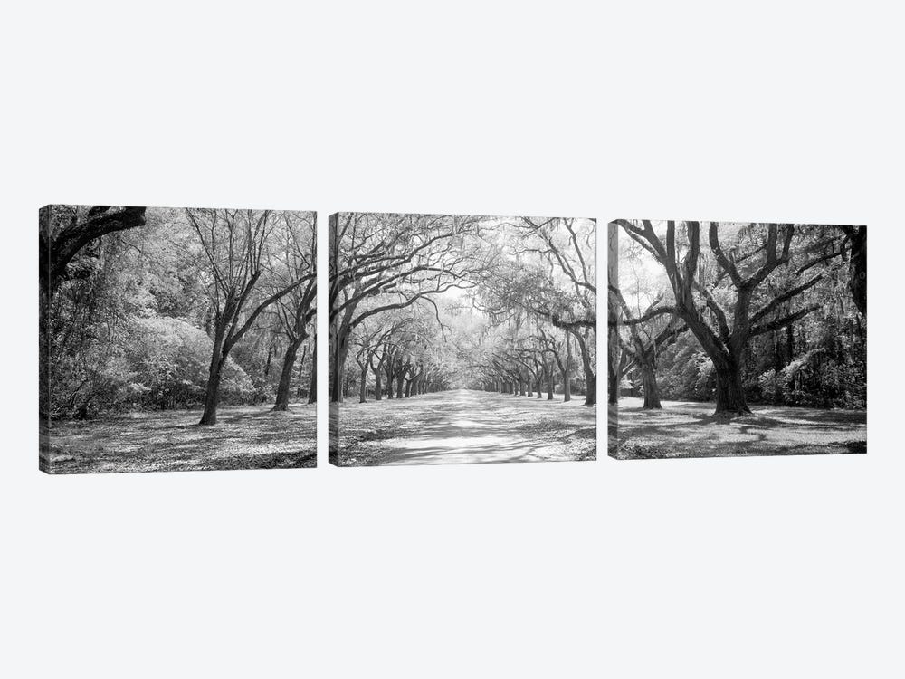 Live Oaks And Spanish Moss Wormsloe State Historic Site Savannah, Georgia (Black And White) II by Panoramic Images 3-piece Canvas Art