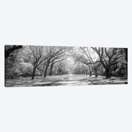 Live Oaks And Spanish Moss Wormsloe State Historic Site Savannah, Georgia (Black And White) II Canvas Print #PIM14721} by Panoramic Images Canvas Artwork