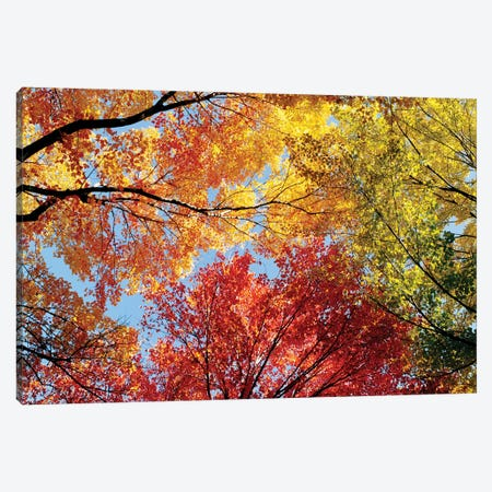 Low Angle View Of Autumn Trees Canvas Print #PIM14723} by Panoramic Images Canvas Artwork