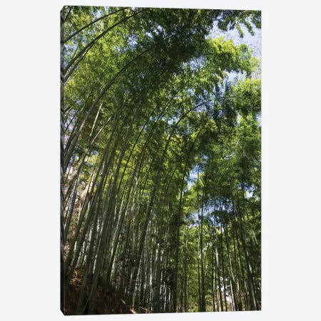 Low Angle View Of Bamboo Trees, Chuson-Ji, Hiraizumi, Iwate Prefecture, Japan Canvas Print #PIM14724} by Panoramic Images Canvas Art Print